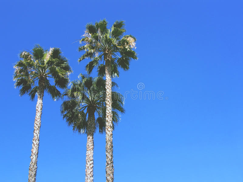 Tre palmträd mot blå himmel Bearbetad tappningstolpe Mode, lopp, sommar, semester och tropiskt strandbegrepp arkivfoton