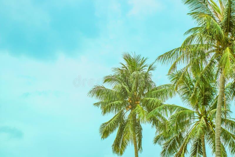 Tre palmträd mot en molnig himmel royaltyfria foton