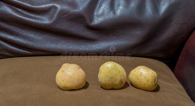Tre patate fresche su uno strato immagini stock libere da diritti