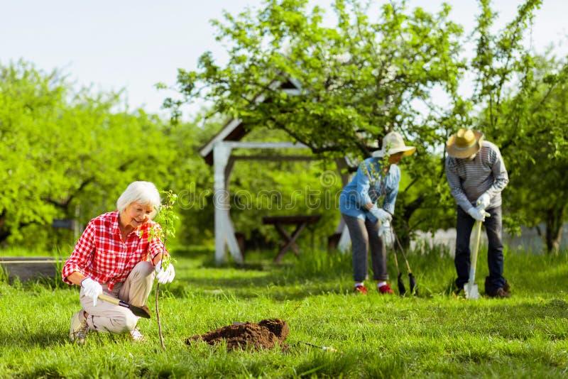 Tre pensionati che amano natura che pianta gli alberi in giardino fotografia stock
