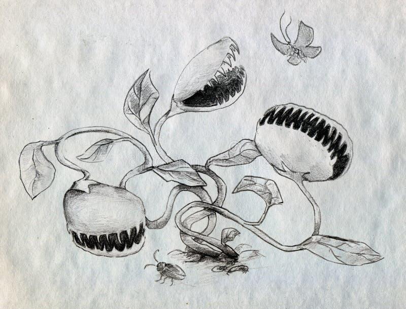Cercare delle piante carnivore illustrazione di stock for Piante carnivore prezzi