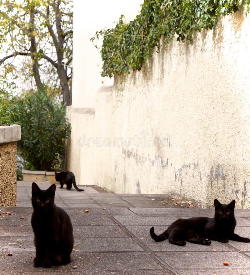 Tre piccoli gatti fotografia stock libera da diritti
