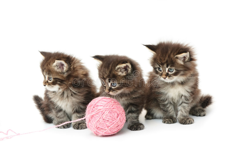 Tre piccoli gattini immagine stock