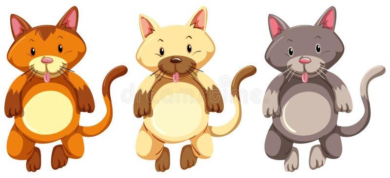 Tre piccoli gattini con il fronte sciocco illustrazione di stock
