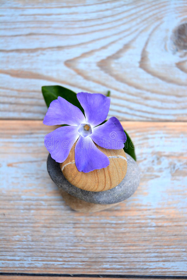 Tre pietre di zen su legno usato con i fiori porpora immagine stock