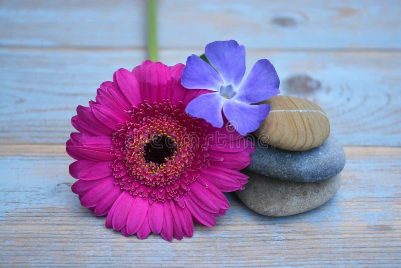 Tre pietre di zen su legno usato con i fiori porpora e rosa fotografie stock