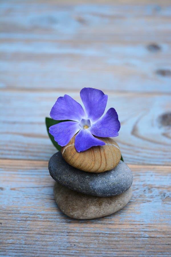 Tre pietre di zen su vecchio legno con il fiore porpora fotografia stock libera da diritti