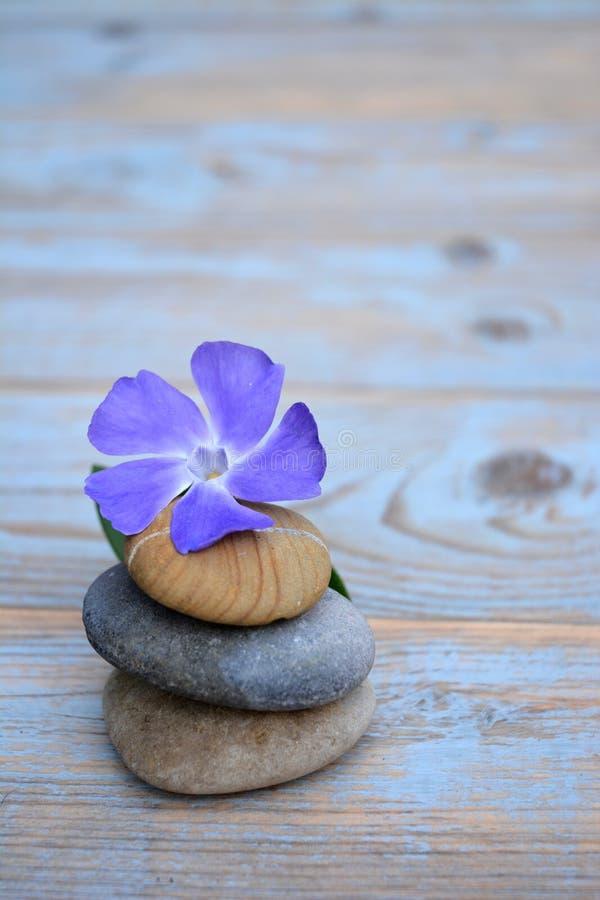 Tre pietre di zen su vecchio legno con il fiore porpora fotografie stock libere da diritti