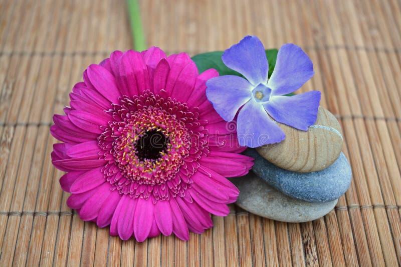 Tre pietre di zen sulla canna di bambù con il fiore rosa e porpora immagini stock