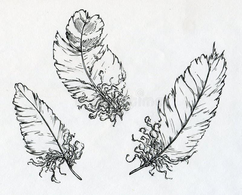 Tre piume disegnate con inchiostro illustrazione vettoriale