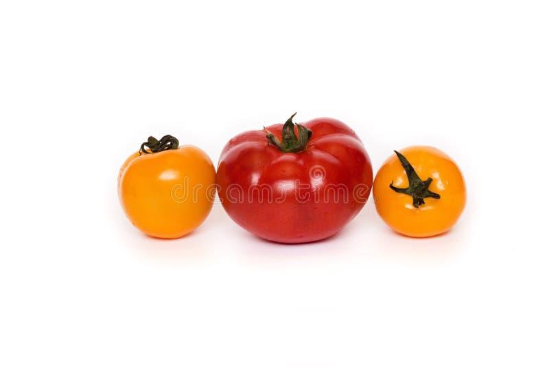 Tre pomodori freschi isolati su fondo bianco immagine stock