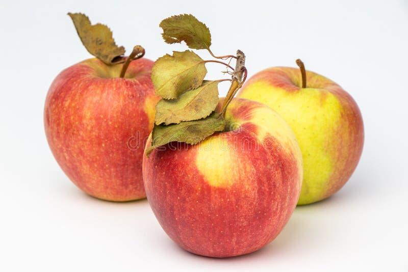 Tre röda äpplen på en vit bakgrund arkivfoton