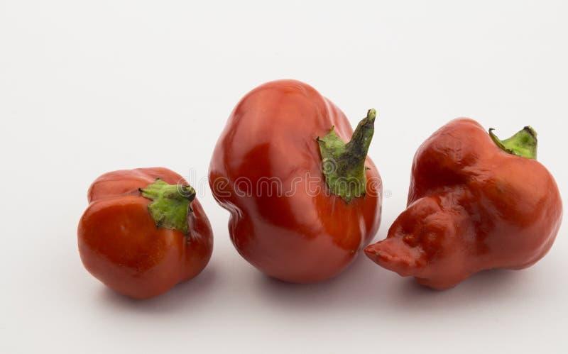 Tre röda chilipeppar som isoleras på vit royaltyfri fotografi