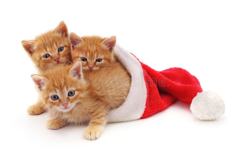 Tre röda kattungar i hattjultomten royaltyfri bild