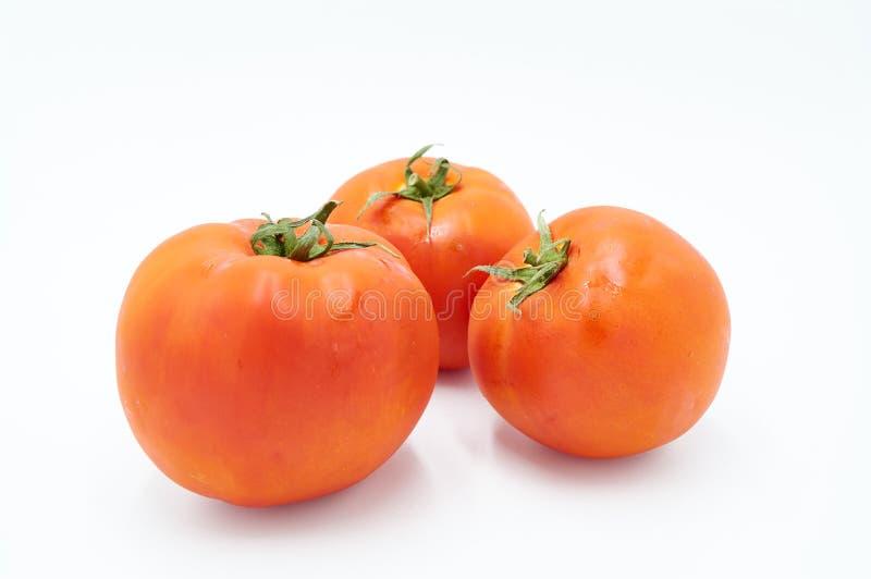 Tre röda nya och Juice Tomatoes royaltyfri bild