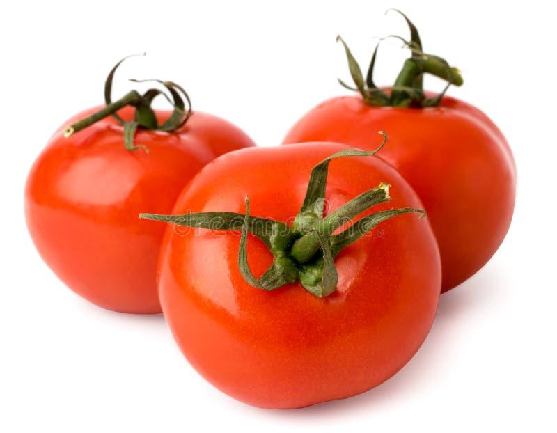 Tre röda tomater på en vit, närbild isolerat arkivfoton