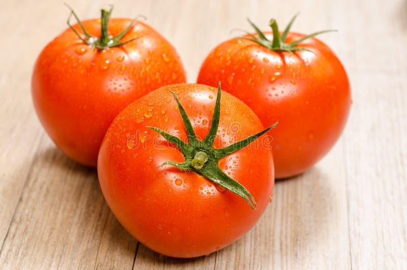 Tre röda våta tomater royaltyfria bilder