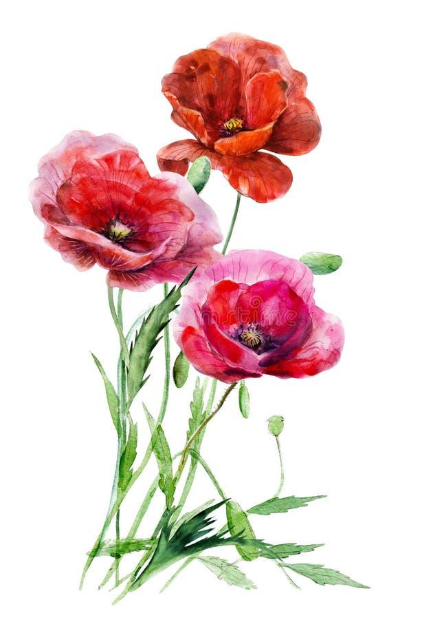 Tre röda vallmoblommor mot bakgrunden av destinerade stjälk Hand dragen blom- illustration för vattenfärg vektor illustrationer
