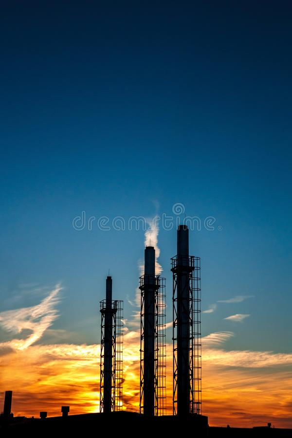 tre rör av en växt på en bakgrund av solnedgången och blå himmel S royaltyfria bilder