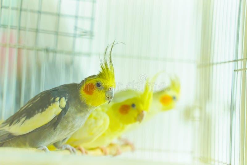 Tre recinti per bestiame del pappagallo immagini stock libere da diritti