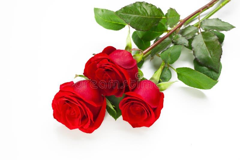 tre rose rosse fotografia stock libera da diritti