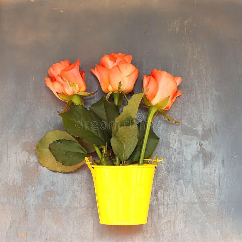 Tre rose rosse in poco secchio giallo su fondo di legno blu fotografia stock