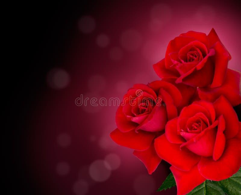 Tre rose rosse sono su fondo nero fotografia stock