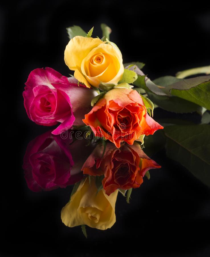 Tre rosor, guling, apelsin och rosa färger på det skinande svarta golvet, isola royaltyfria foton