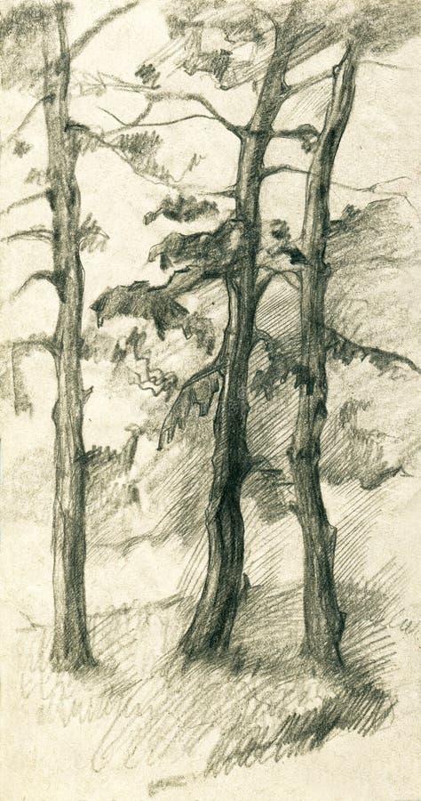 Tre sörjer träd i skogblyertspennan skissar illustrationen royaltyfri illustrationer