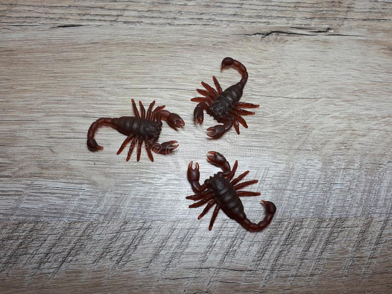 tre scorpioni su una tavola di legno leggera fotografie stock libere da diritti