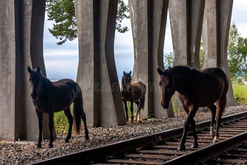 Tre siluette di un cavallo che cammina sulle rotaie nella campagna immagine stock