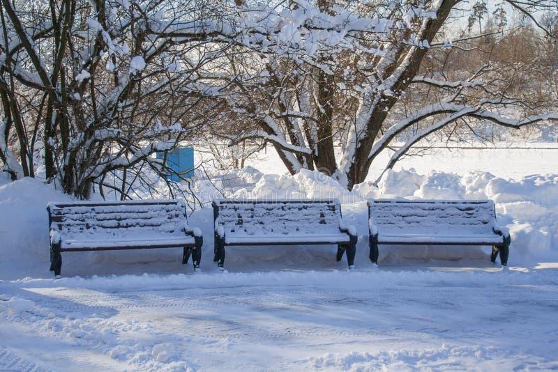 Tre som träsnö täckte bänkar i, parkerar royaltyfri foto