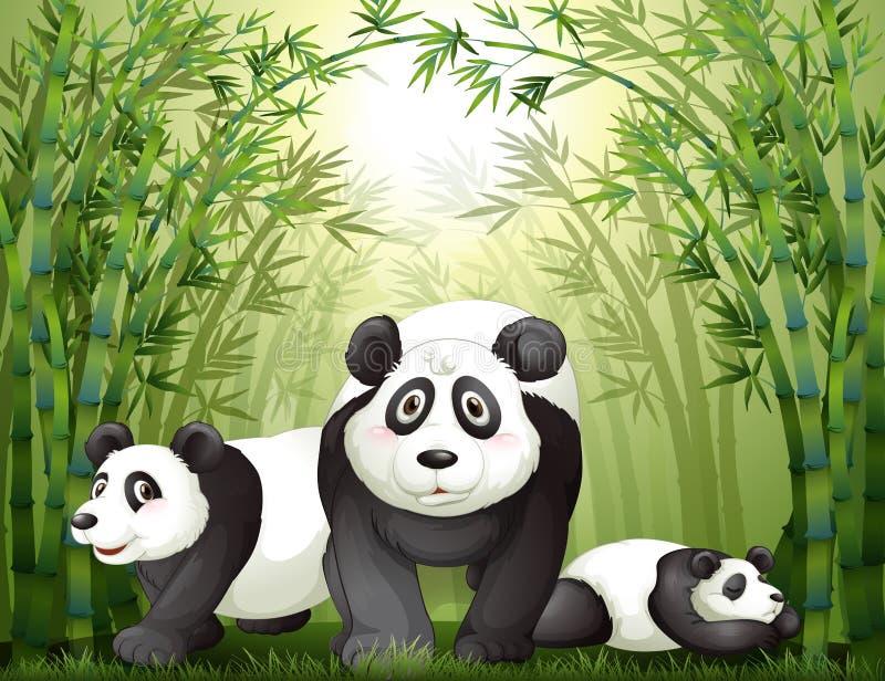 Tre stora björnar på rainforesten stock illustrationer