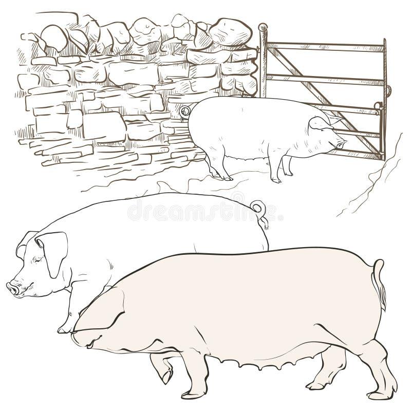 Tre stora svin på porten royaltyfria bilder