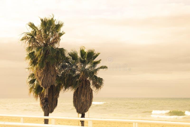 Tre stora tropiska palmträd mot havet och beiga, yello arkivfoton
