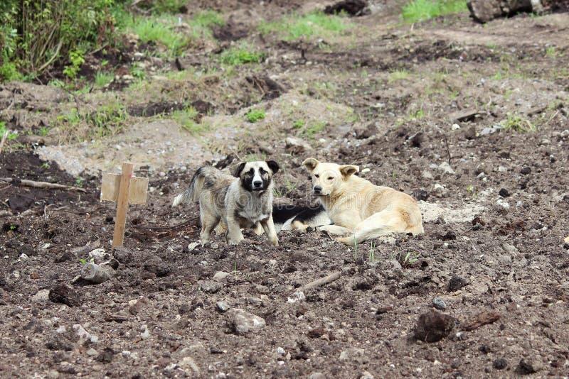 Tre tillfälliga hundkapplöpning grävde på svartjordningen i området av vägreparationen royaltyfria bilder