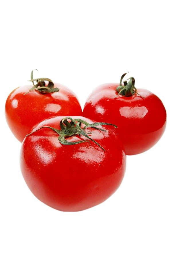 tre tomater arkivfoto