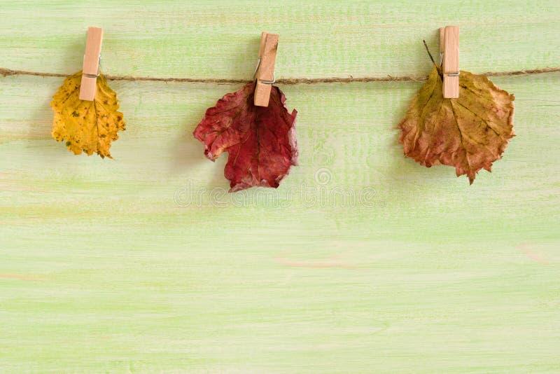 Tre torr guling och röda höstsidor med ben på ett rep på en träbakgrund royaltyfria bilder