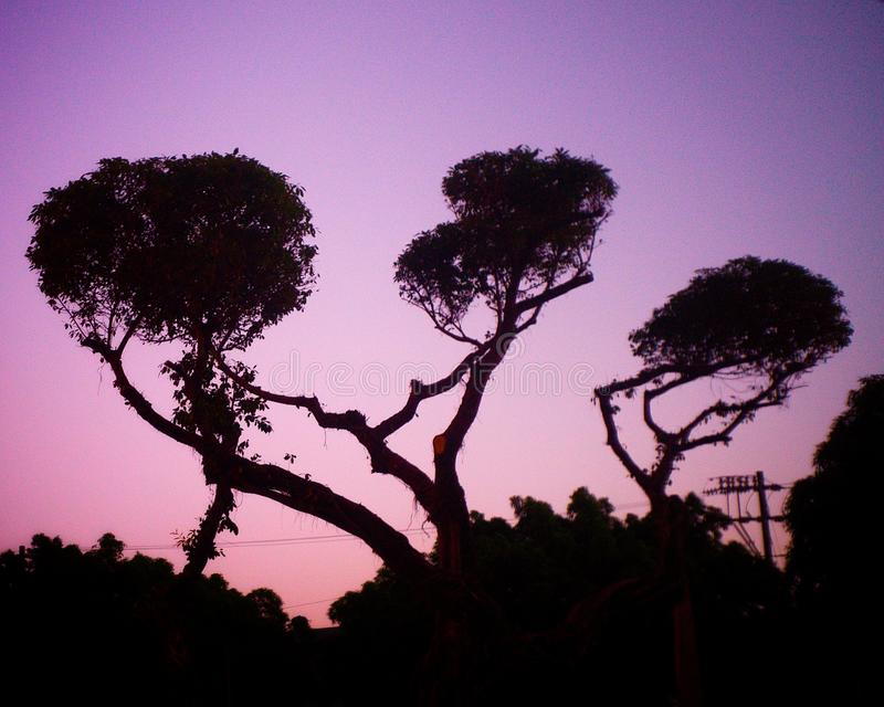Tre trädfilialer arkivfoton