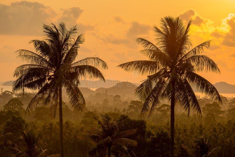 Tre tropicale della palma nell'alba Isola Koh Samui, Tailandia fotografia stock libera da diritti