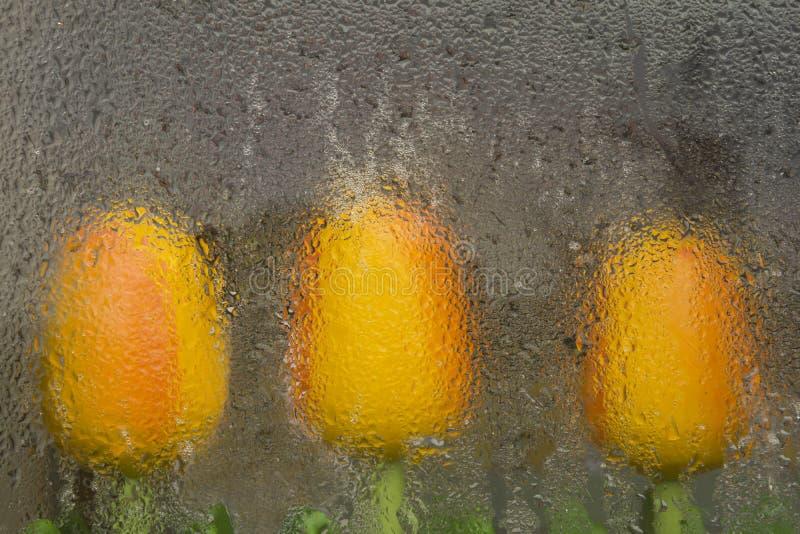 Tre tulipani arancio attraverso la finestra un giorno piovoso fotografie stock libere da diritti