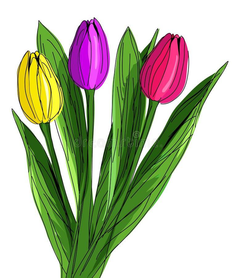 Tre tulipani rossi, porpora e gialli disegnati a mano con i laeves verdi isolati su fondo bianco Illustrazione di vettore in royalty illustrazione gratis