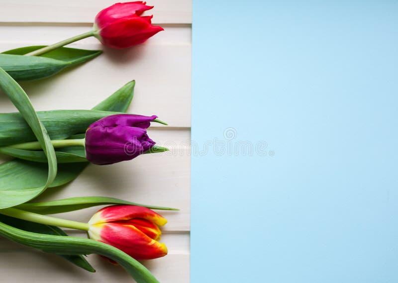 Tre tulipani su fondo di legno e su carta blu Invito perfetto per la festa della mamma o la Giornata internazionale della donna m immagine stock