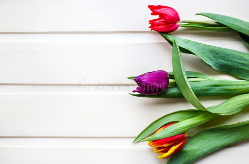 Tre tulipani su fondo di legno Invito perfetto per la festa della mamma o la Giornata internazionale della donna Fiore luminoso m immagine stock