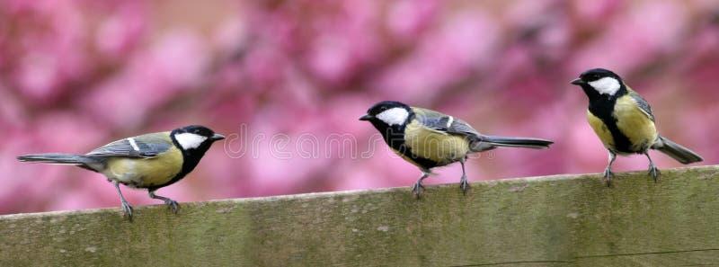 Tre uccelli del giardino sulla rete fissa fotografie stock libere da diritti