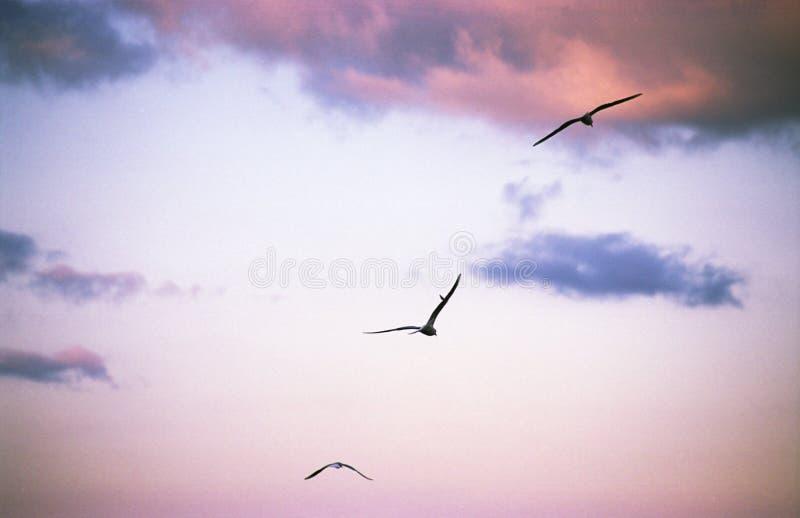 Tre uccelli nel volo immagine stock