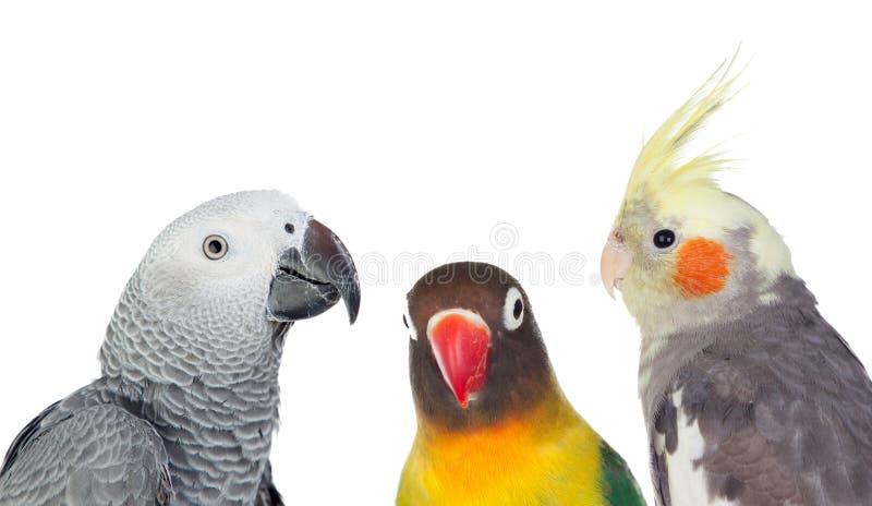 Tre uccelli tropicali dei differents fotografia stock libera da diritti