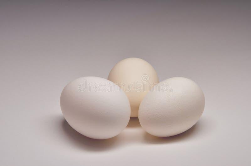 Tre uova bianche immagini stock libere da diritti