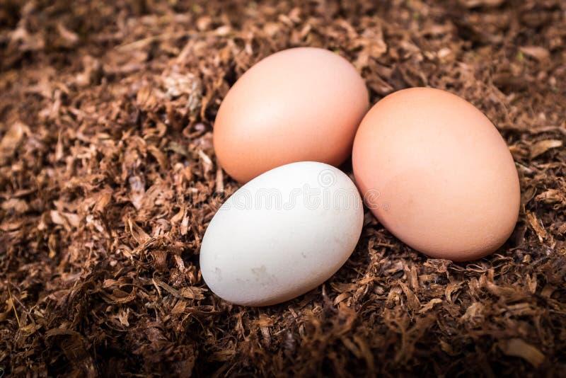 Tre uova fresche orizzontali immagini stock