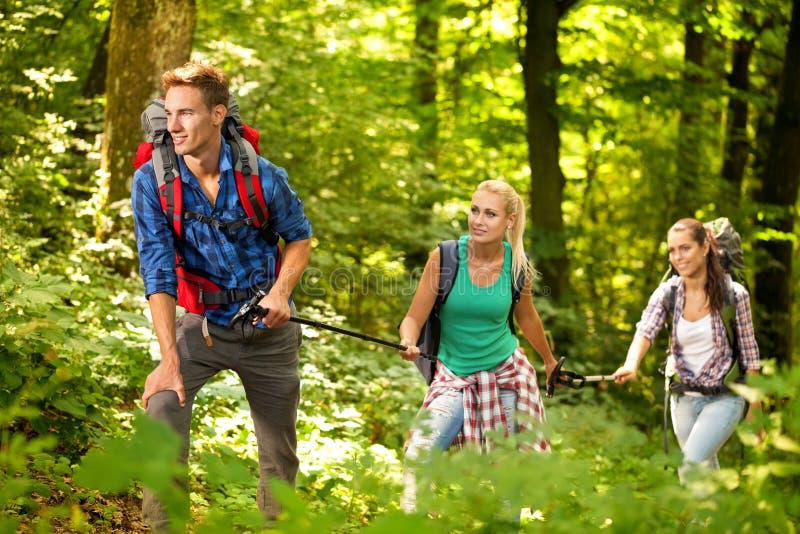 Tre vänner som fotvandrar till och med skogen royaltyfria foton